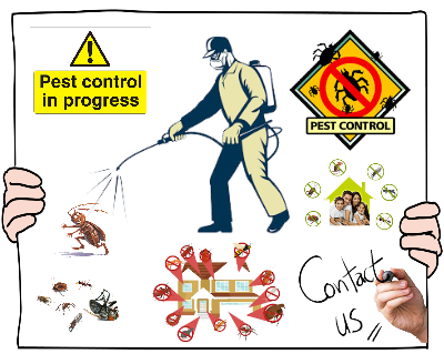 Pest Control Services in Perth