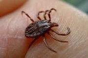 Pest Control for Ticks